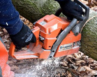 Cutting back small – medium trees